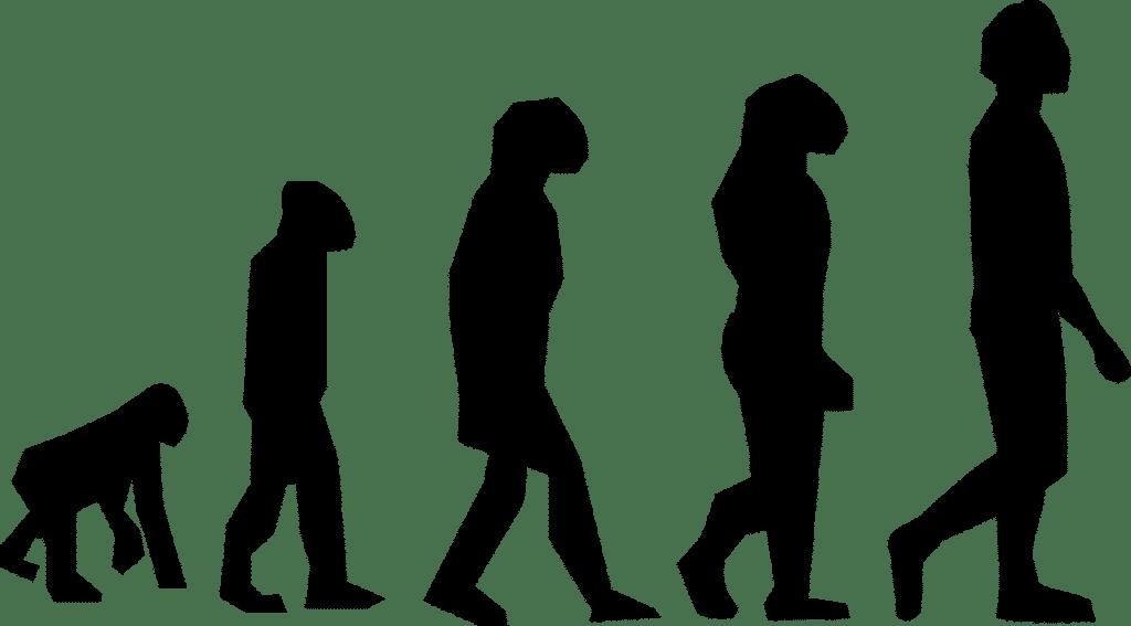 דמויות מציגות אבולוציה